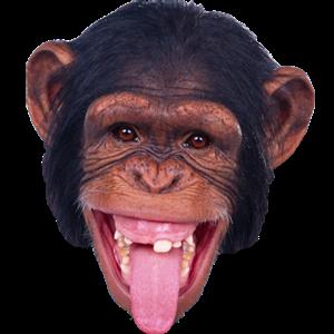 Apinanpää