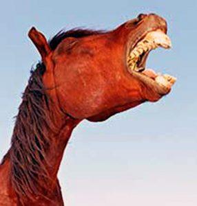 Hevonen nauraa