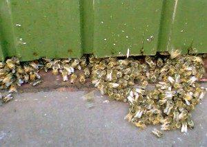 Kuolleita-ja-kuolevia-mehiläiset_2007
