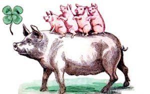 Five_pigs